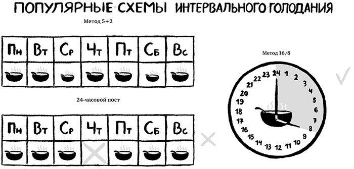 Интервальное голодание — как точно вычислить время / блог компании lifext / хабр