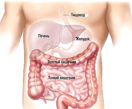 Заболевания толстой кишки: симптомы, причины, лечение