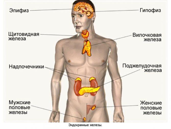 Что делать при нервной дрожи в теле: причины возникновения и методы лечения