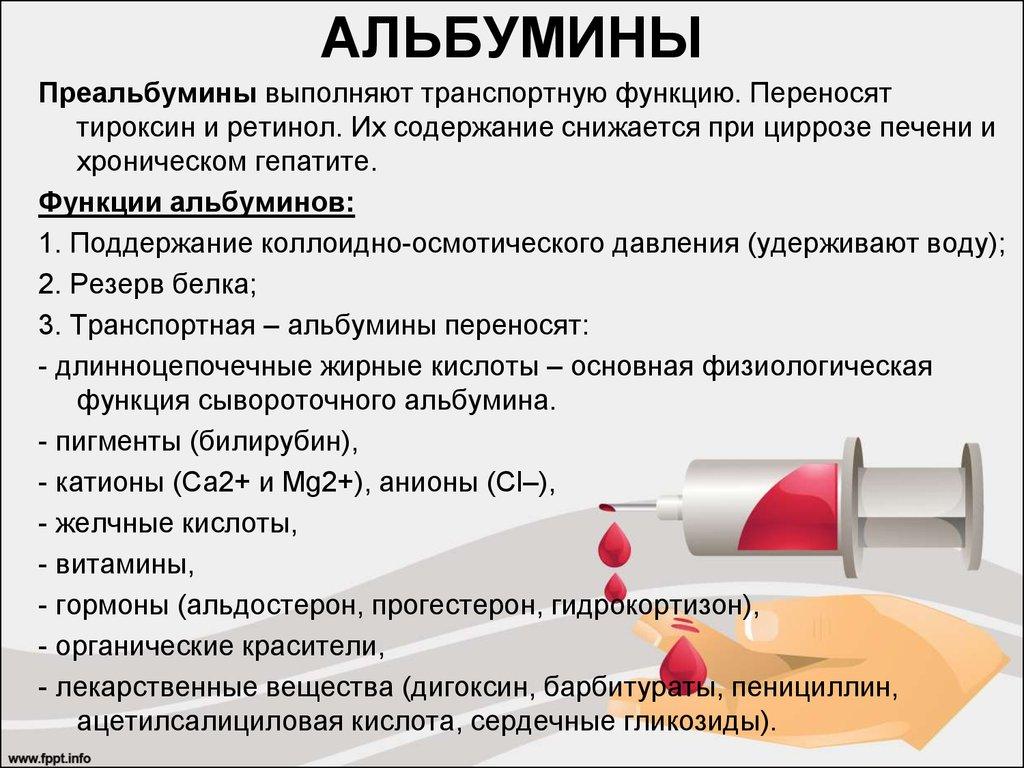 Норма альбуминов в крови: почему повышен уровень, причины, что это значит