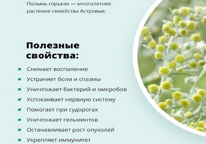 Дурман-трава: описание и фото, польза и вред