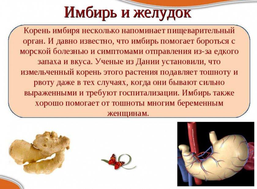 Что такое имбирь: его полезные свойства для организма и противопоказания, состав и особенности применения
