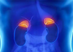 Эндокринная система-физиология и гистология