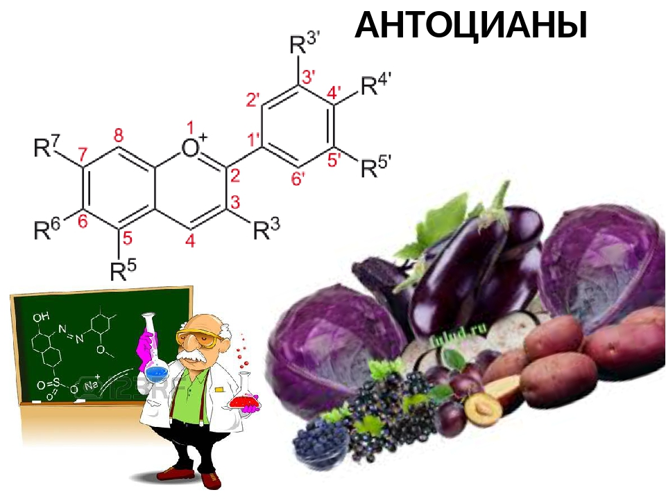 Антоцианы: свойства, польза и вред | food and health