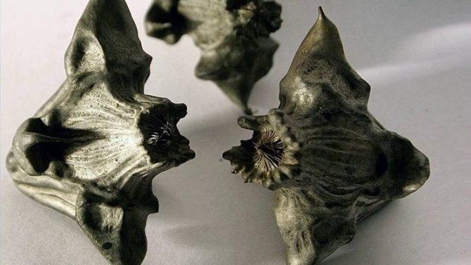 Чилим: описание и применение плавающего водяного ореха