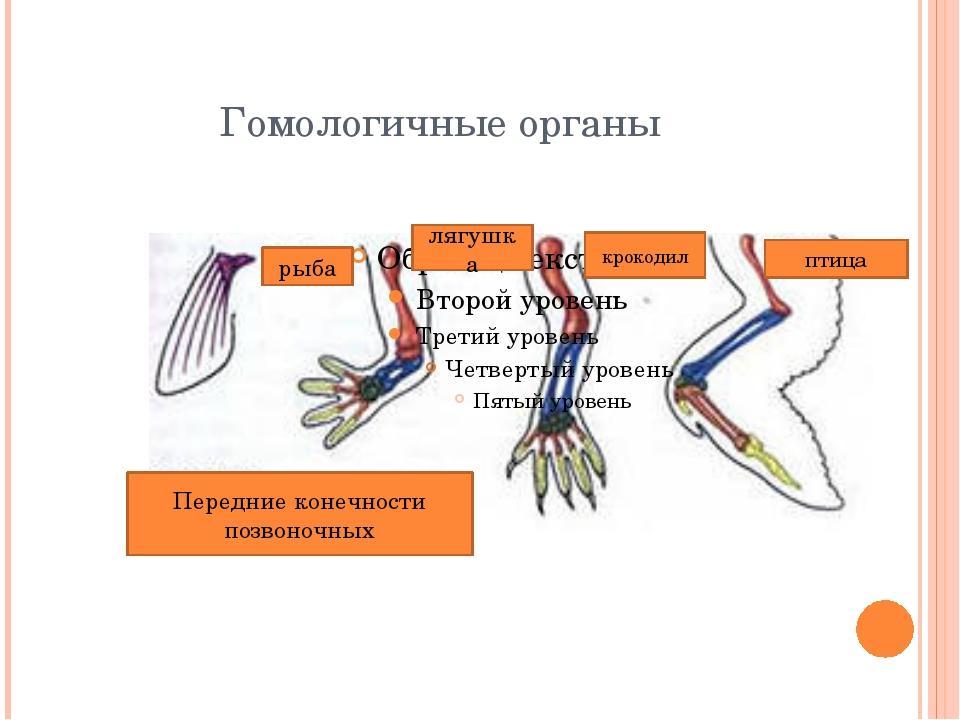 Аналогичные органы