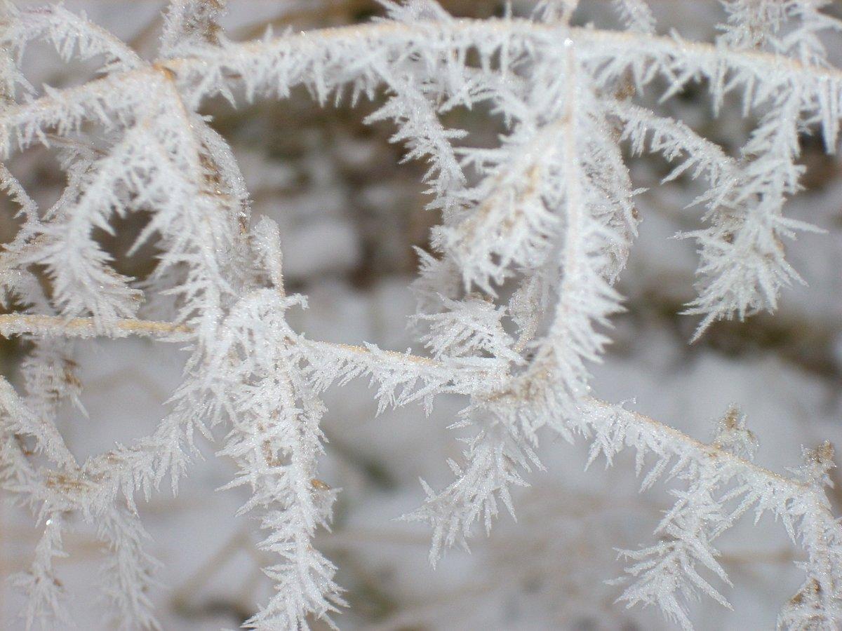 Изморозь — википедия
