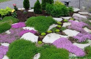 Рокарий: виды и особенности подбора для создания сада камней (145 фото)