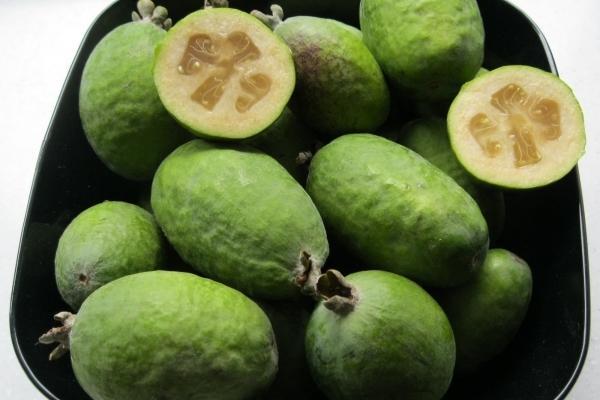 Фейхоа: полезные свойства и противопоказания фрукта для организма, для щитовидки, калорийность