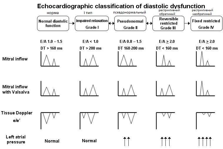 Диастолическая дисфункция: симптомы и лечение