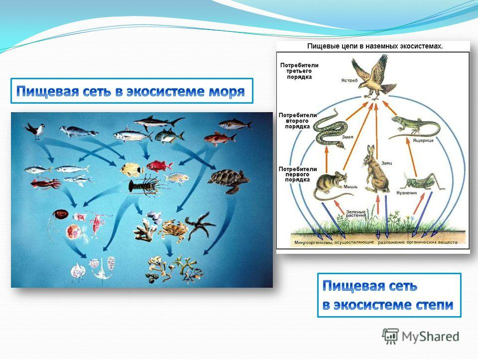 Биоценоз, биотоп, экосистема