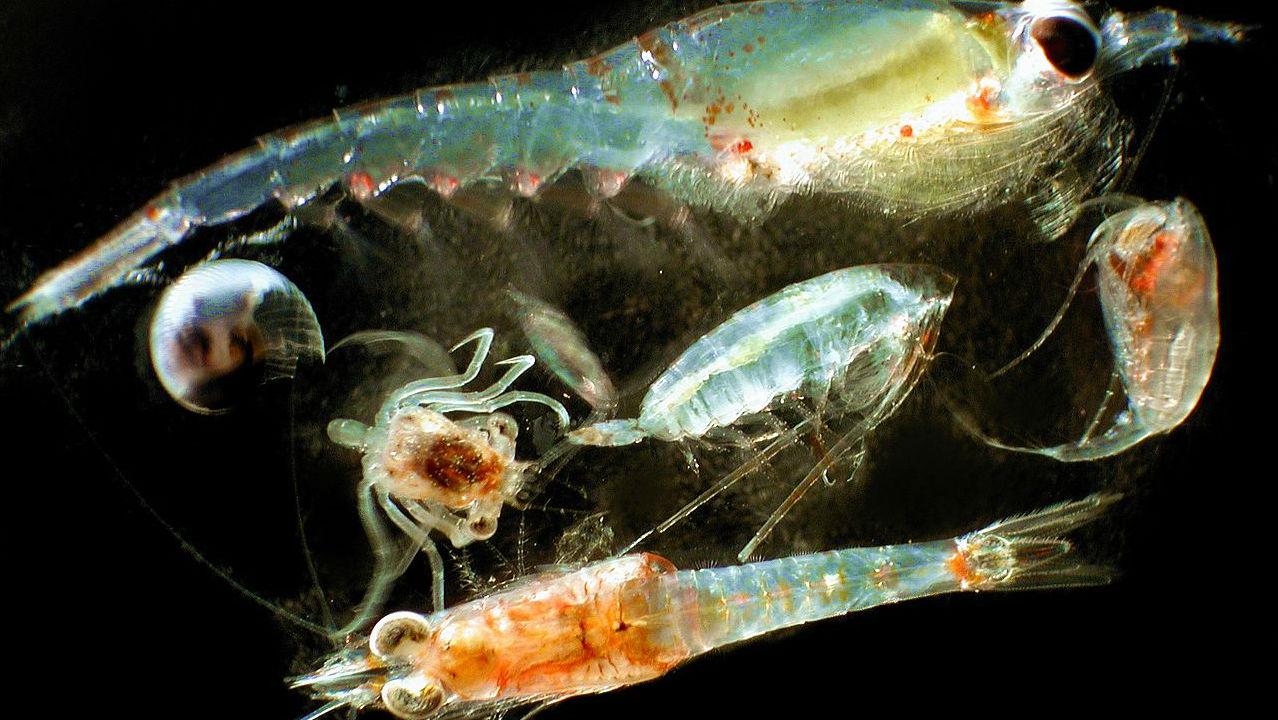 Что такое планктон