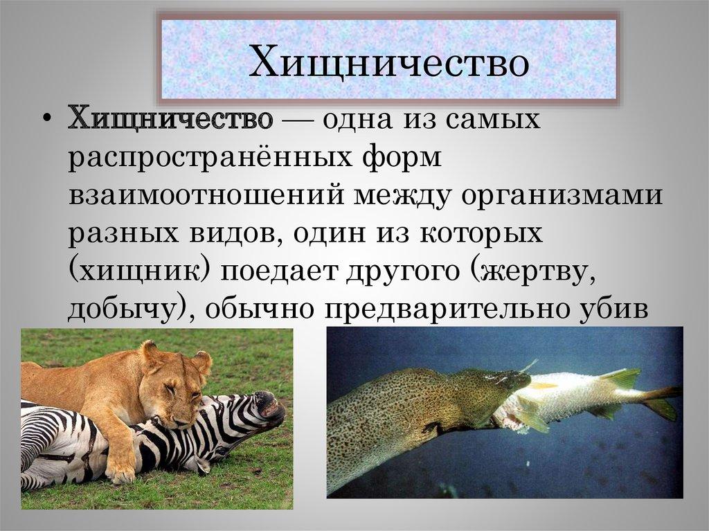 Хищничество примеры. взаимосвязь живых существ. - сайт по биологии