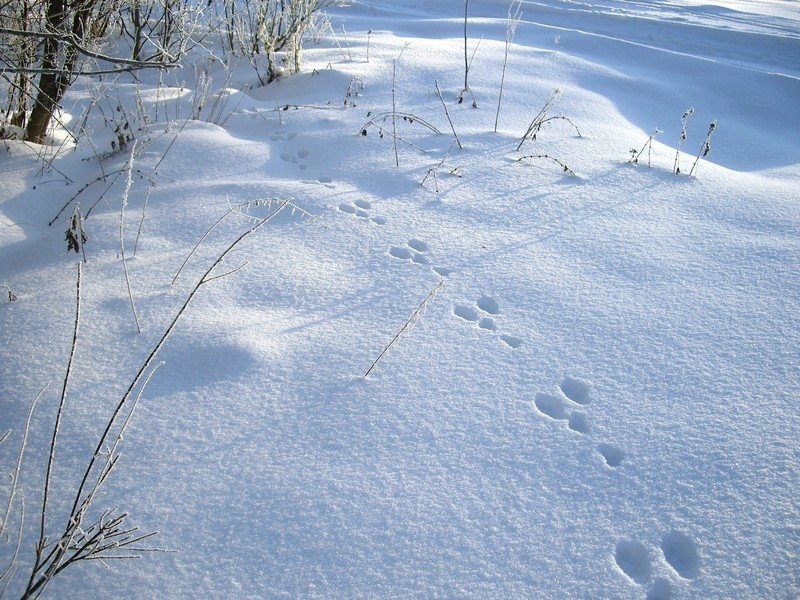 Пороша – это зимняя перина земли