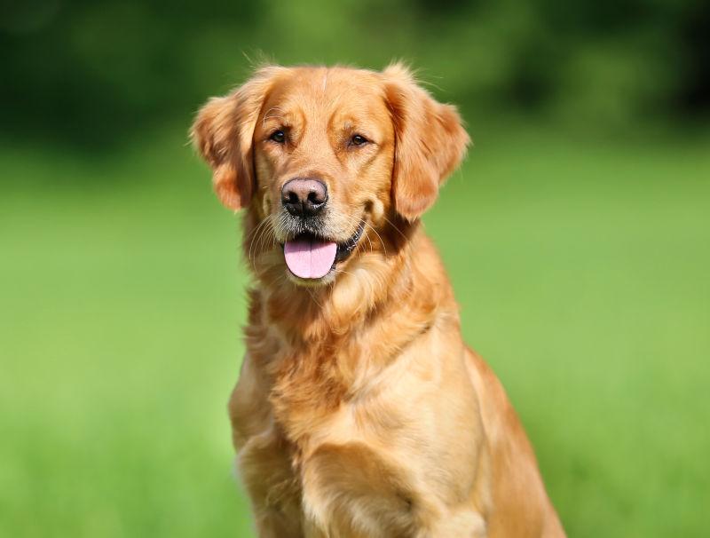 Течка у собак: все, что вы хотели знать