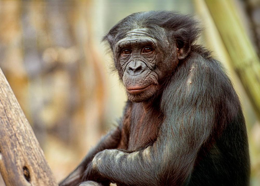 Самые красивые виды обезьян: фотографии и описание