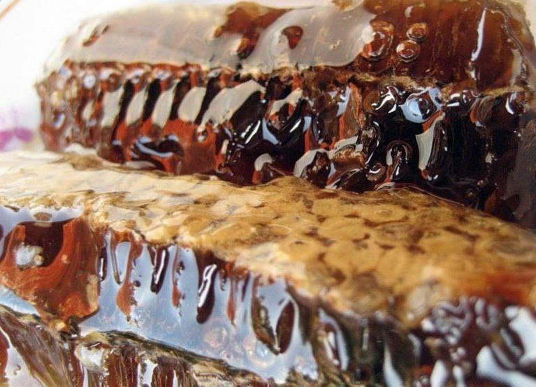 Что такое падевый мед и его особенности