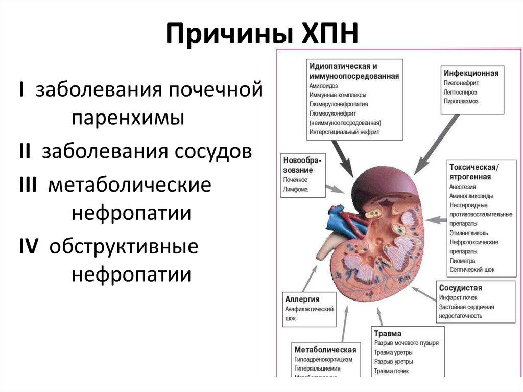 Нефритический синдром: развитие, виды (хронический, острый), лечение