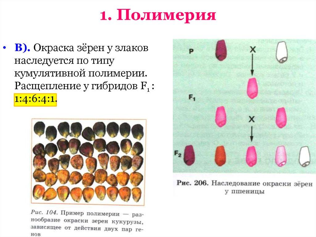 Эпистаз у человека примеры, эпистатический ген