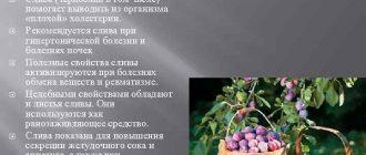 Слива лиловая, спелая, садовая: польза и вред для здоровья человека