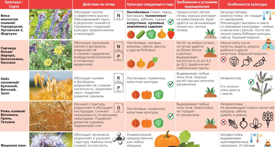 Лучшие сидераты для огорода и дачи: что это такое, как их применять