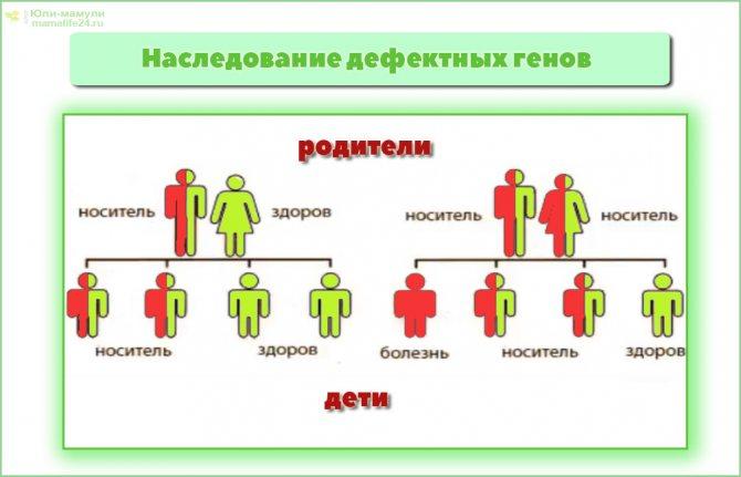 """Конспект """"генетика. наследственность и изменчивость"""" - учительpro"""