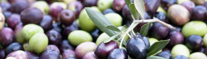 Оливки и маслины: в чем разница между ними и что полезнее? что скрывается за названиями?