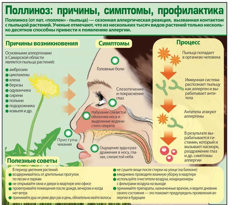 Поллиноз – причины, симптомы, лечение, профилактика, прогноз