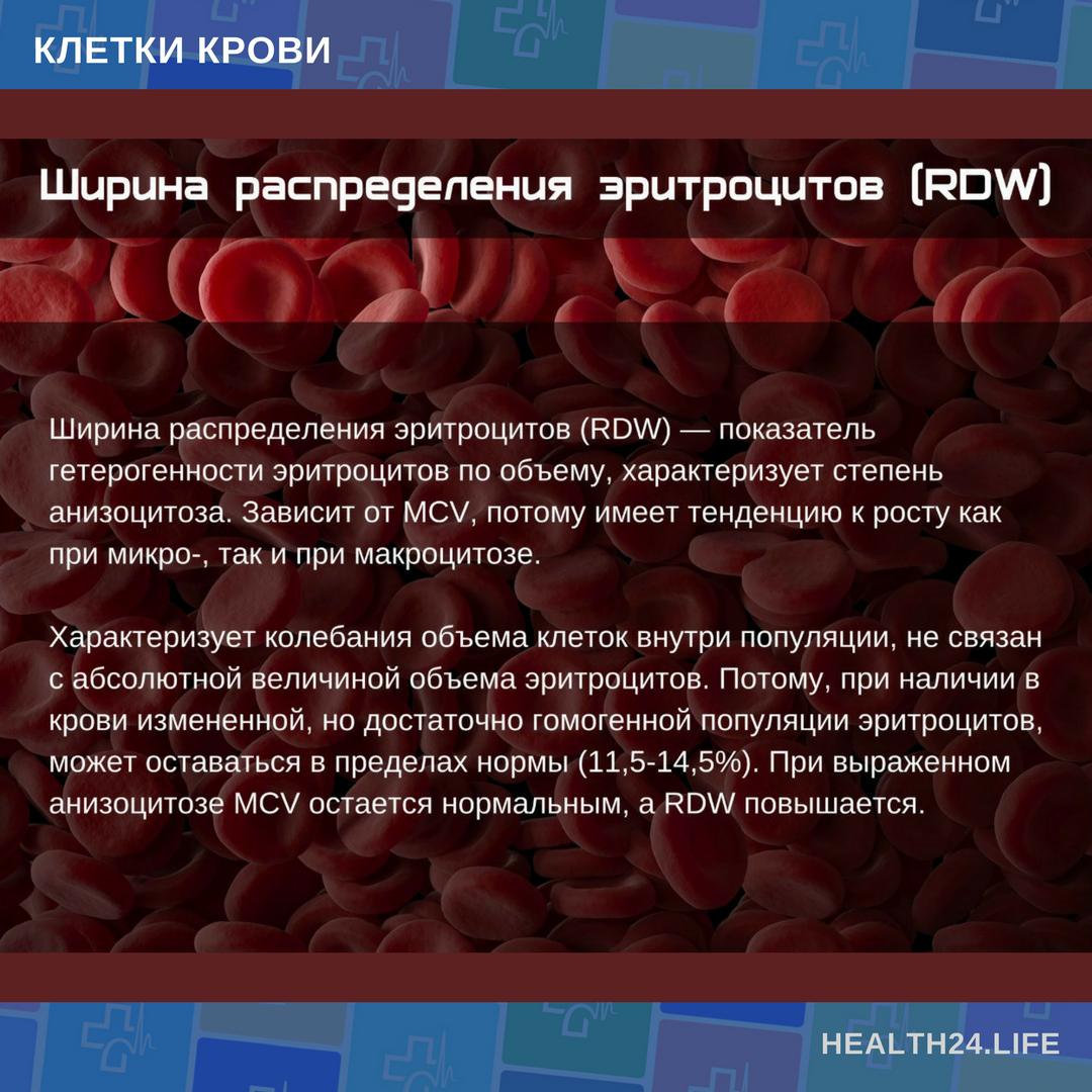 ✅ rdw анизоцитоз в общем анализе крови ниже нормы - денталюкс.su