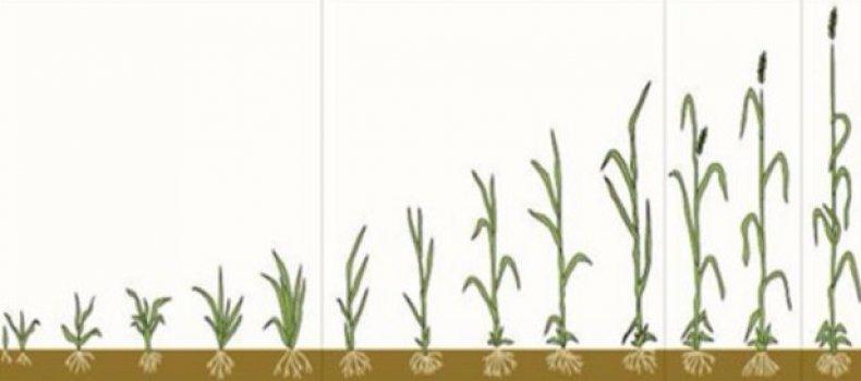 Черная смородина: обработка от вредителей весной, летом и осенью. чем обрабатывать смородину осенью от вредителей и болезней
