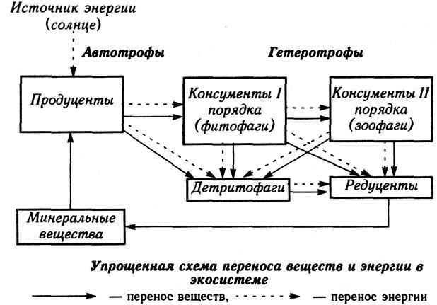 Консументы в экологии — кто это такие, роль в экологии, консументы 1, 2, 3 порядка