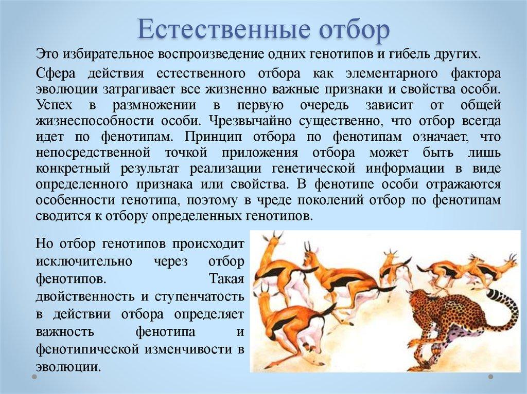 Что такое естественный отбор? как работает основной механизм эволюции?