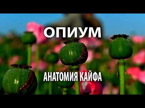 Опиум википедия