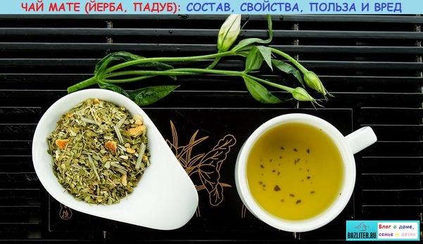 Что бодрит как кофе и поможет справиться с простудой? мате – один из древнейших напитков!