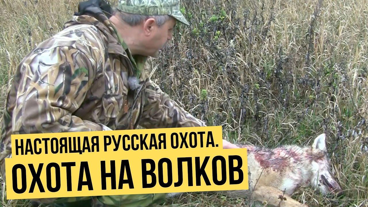 Лёгкая добыча. как устроена вольерная охота в россии