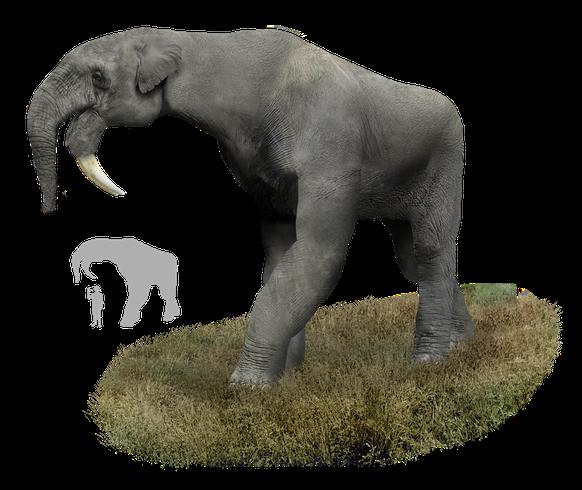 Тероподы: все виды динозавров, фото, картинки самого большого ящера