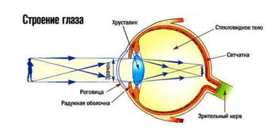 Что такое катаракта: симптомы, причины и лечение болезни — net-bolezniam.ru