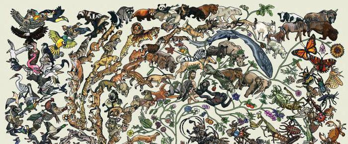 Гомойотермные организмы