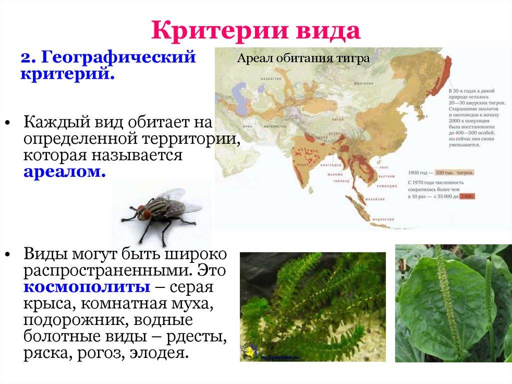 Критерии вида биология примеры