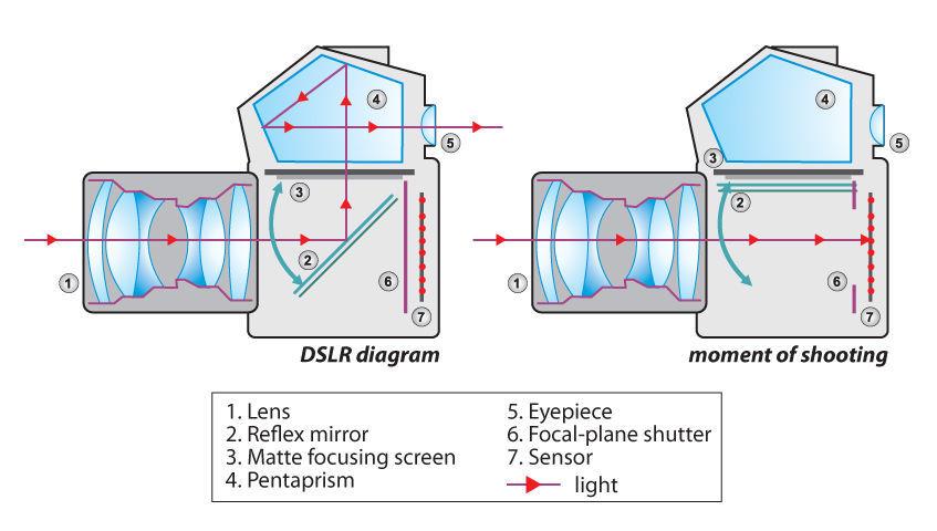 Как устроен и принцип работы зеркального фотоаппарата