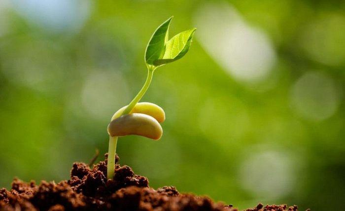 Узнайте, как правильно проводить стратификацию семян в домашних условиях