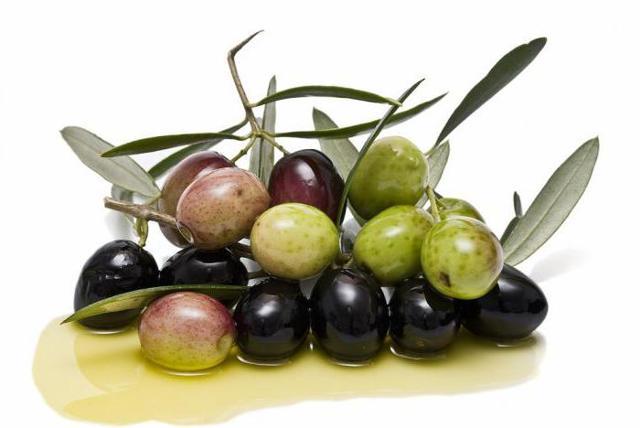 Какие бывают виды и сорта оливок