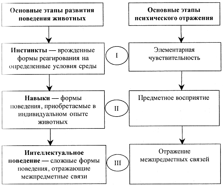Значение и виды филогенеза в психологии
