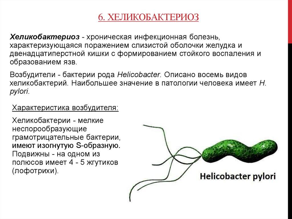 Хеликобактер пилори - что это за бактерия. как выявить и чем лечить хеликобактерную инфекцию в желудке