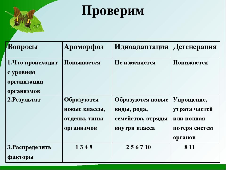 Идиоадаптация у животных и растений, примеры и роль в биологии