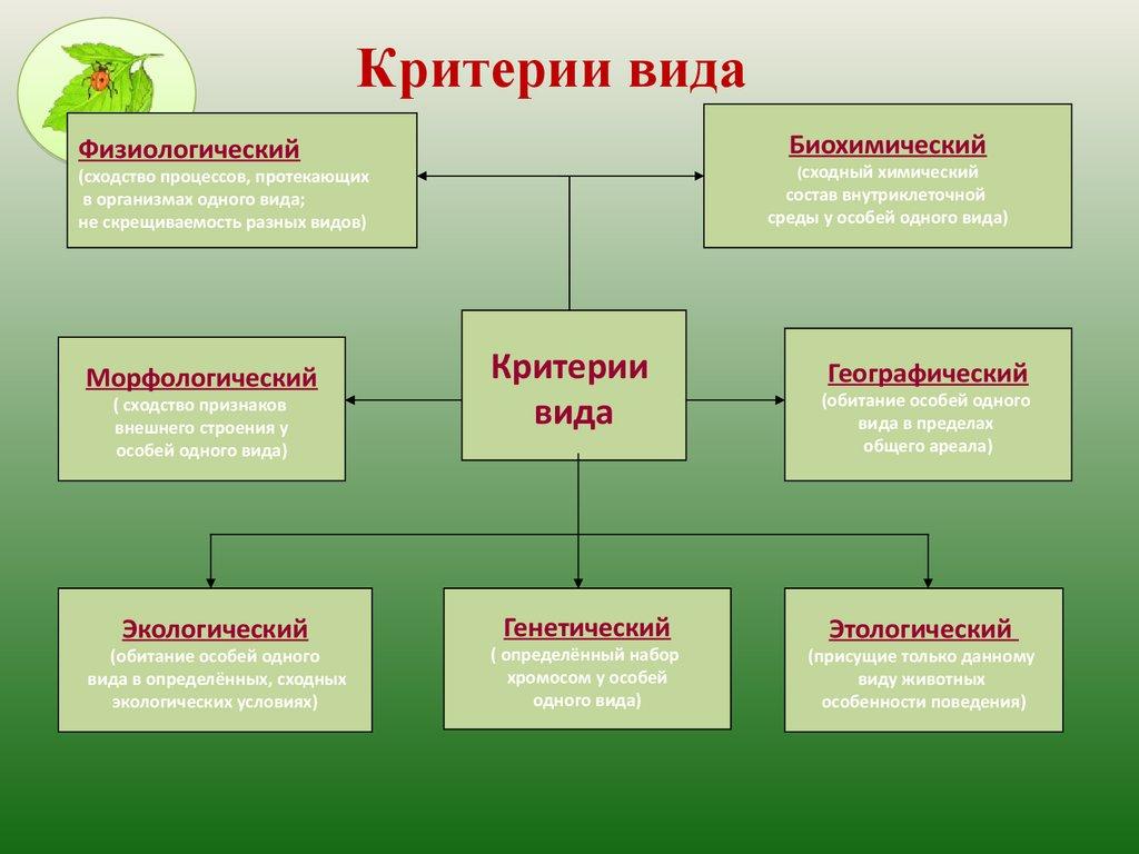 Морфологический критерий вида пример - сайт по биологии