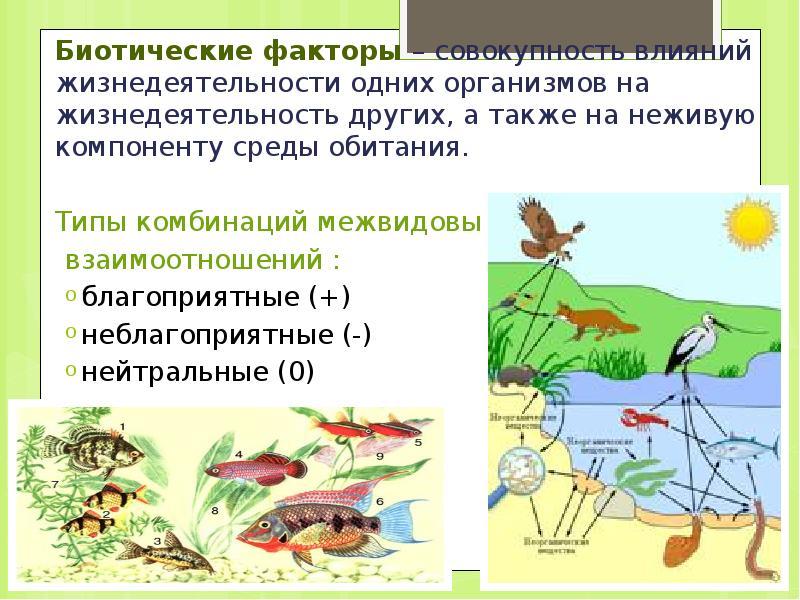 Абиотические факторы окружающей среды
