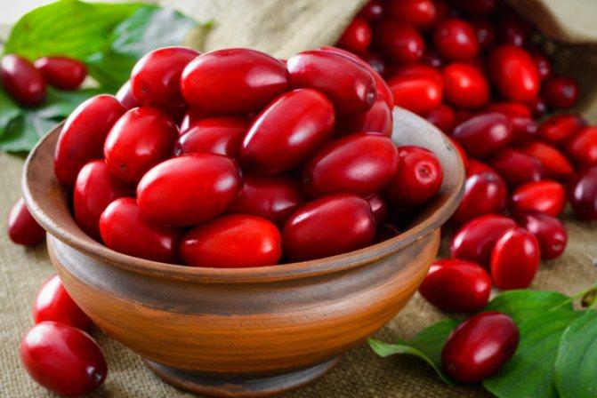 Кизил: полезные свойства и противопоказания, как сохранить на зиму, применение ягод с косточками и без