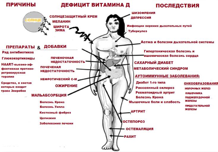 Витамин д и организм человека – полный обзор