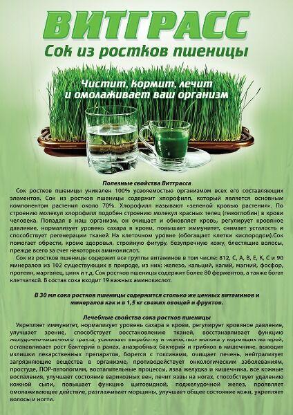 Витграсс — правда, вред и польза пшеничного напитка